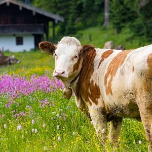 certified bovine collagen