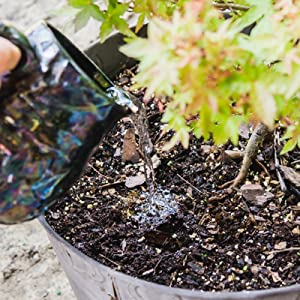 liquid bonsai tree fertilizer growing bonsai shrubs indoors liquid plant food by Perfect Plants