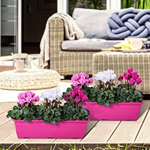 Persian Violet DIY Balcony-Plant Set 6X Persian Violet Cyclamen- Indoor Plant 2X Plant Bowl Anthracite /Ø 27cm Included MoreLIPS/® Height 25-30cm Potting Soil Included Pot Size: 10,5 cm