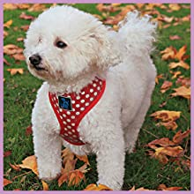 Soft & comfortable padded harness for pets