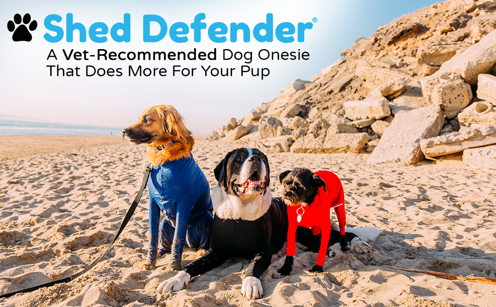 Three different-sized dogs wearing dog onesies sitting at a sandy beach on a sunny day