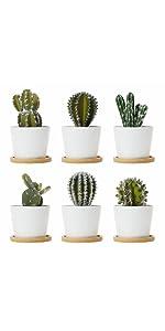 White plant pots