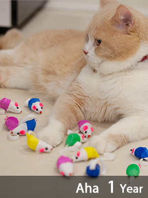 Cat Play Toys