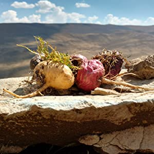 Peruvian Maca, the famed energizing root of the Incas, is an adaptogenic herb.