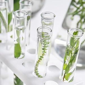 stem cell serum