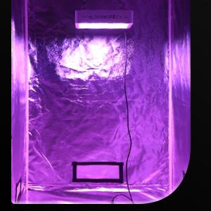 1200W LED Grow Light for Indoor Plants VEG & BLOOM