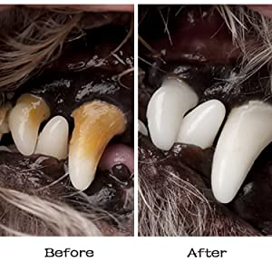 dog teeth clean