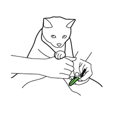 Trimming your pet's nails