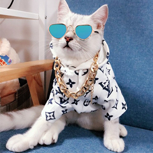 A cool cat wearing the cat collar and sunglasses.