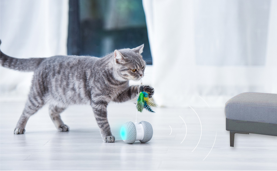 You are going to absolutely love this interactive cat toys