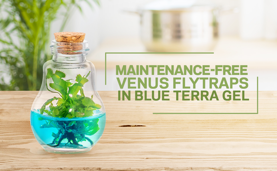 venus fly trap flytrap terra gel maintenance free plant food