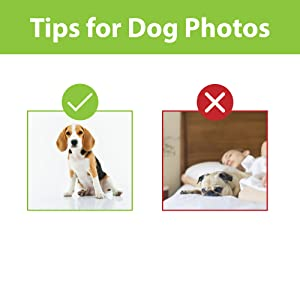 tips for best dog photos