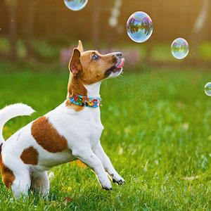 dog bubbles