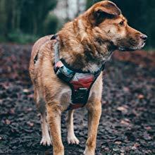 running dog, adventure dog harness, outdoor dog harness, training dog harness, easy walk dog harness