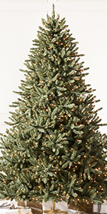7.5ft Classic Blue Spruce Clear