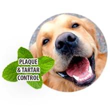 dog marrow bones,edible dog bones,no hide bones,beefhide dog chews,dog edible chews