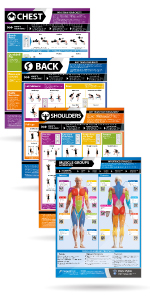 Gym & Exercise Workout Posters