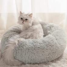 cat at the Soft Bed