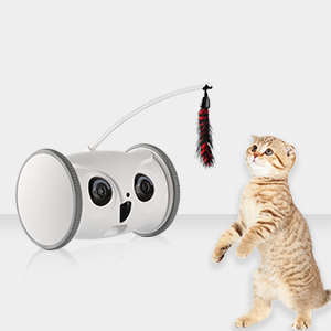 Pet interactive toys