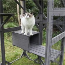 large cat house