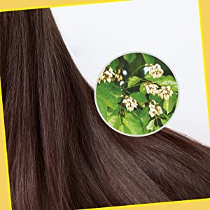 Karanj in Scalp and Hair Care