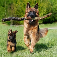 Two Dog Trainer Set