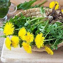 superfood dandelion liver support