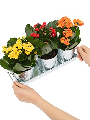 flower pots and tray set