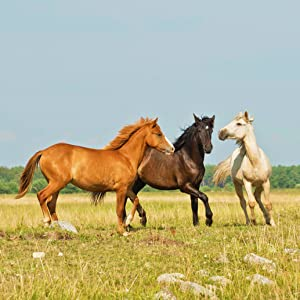 Horses playing that have been fed Majesty's Bio+ Wafers