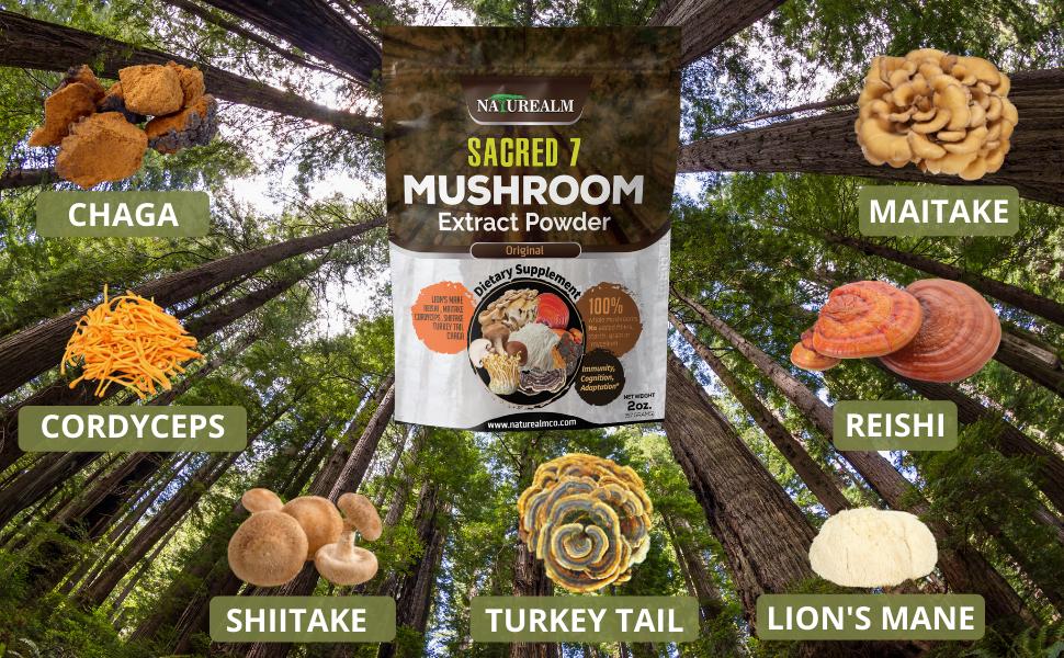 mushroom extracts maitake lions mane reishi chaga tukey tail cordyceps