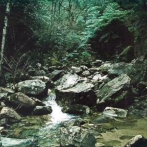 中国山地の原生林からの栄養が広島湾に流れ込みます。