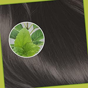 Potential of Tulsi in Hair Health