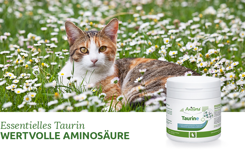 Aniforte Taurin Header