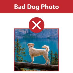 Bad Dog Photo