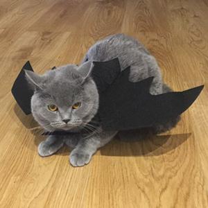 A cat bat