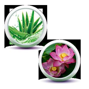 Aloe Vera & Lotus