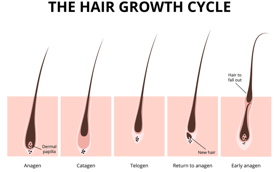 Hair supplements for hair growth female hair loss supplement beauty 360 hair growth haur growth  D3