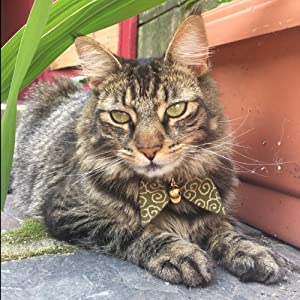 beautiful bowtie cat collar with bell and id tag