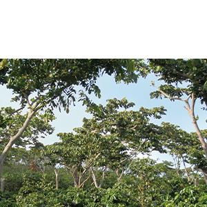 shade trees - sustainability