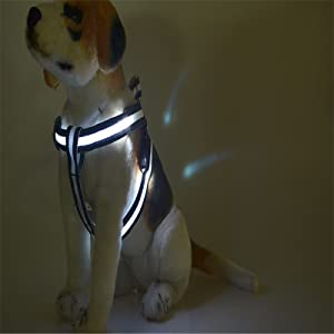 led harness white