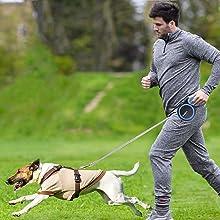 dog lead leash