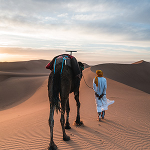 Man walking with Camel through Desert