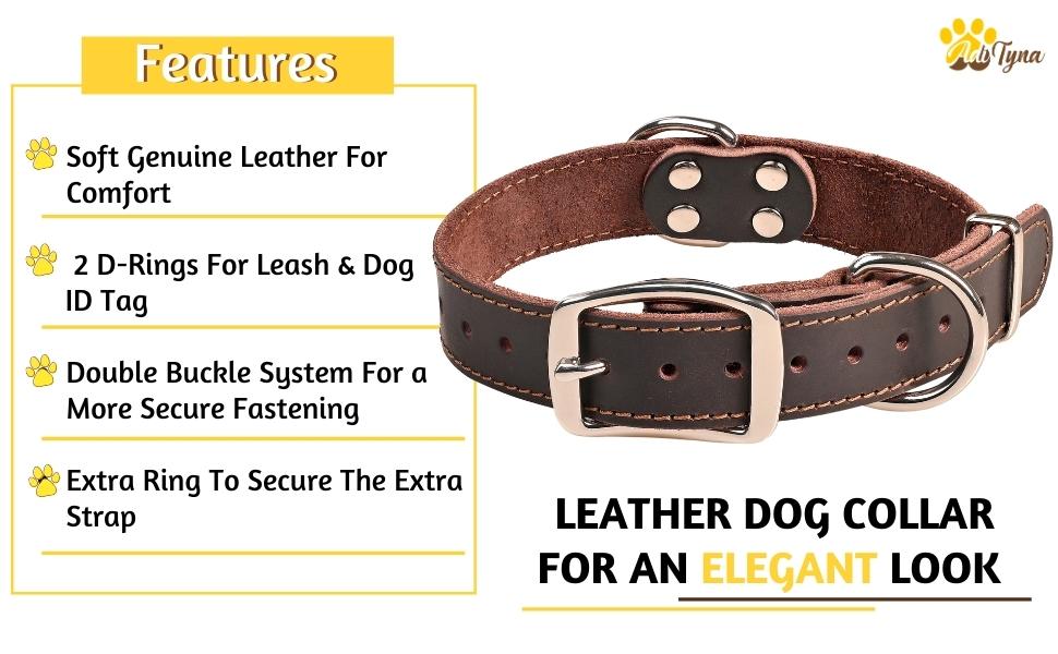 Dog Collar for Medium Dog