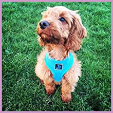 Soft & comfortable padded harness for pets.