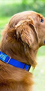 dogIDS Personalized Colorful Combination Nylon ScruffTag Dog Collar - Custom, Engraved, ColorSplash