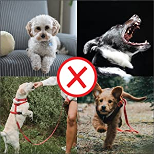 Training tools to assist in fixing obedience issues associated with your dog.