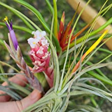 Flowering & Propagation