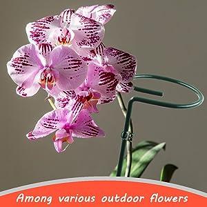 flower support