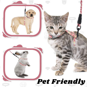 Safe and comfortable for all pets.