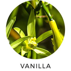 Vanila lip balm